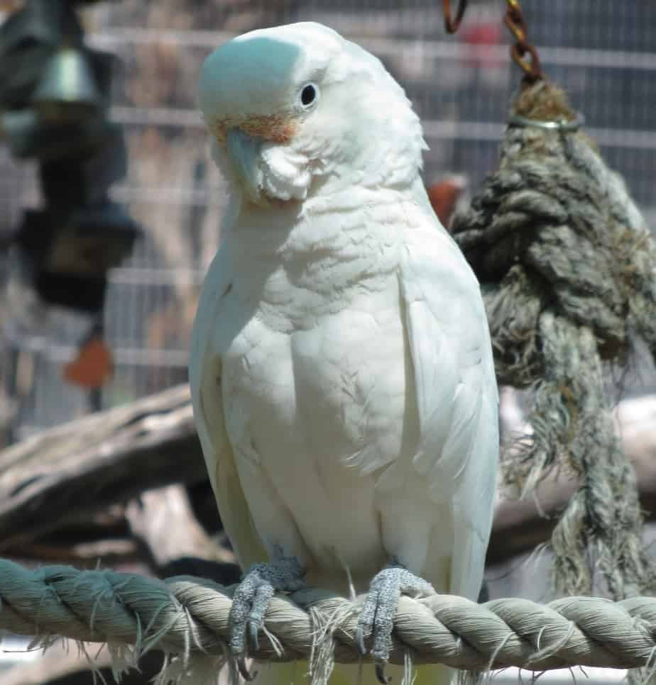 The Gabriel Foundation – Parrots: Their Lives, Our Choice